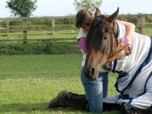 Tay Valley Vets brown horse in a field with colic being comforted by owner