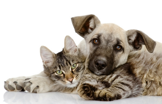 Tay Valley Vets Cat and Dog