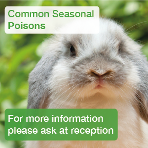 Common Seasonal Poisons for rabbits