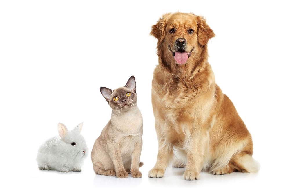 Adult Pet Care Plan Services image showing a dog, cat and rabbit on a white background