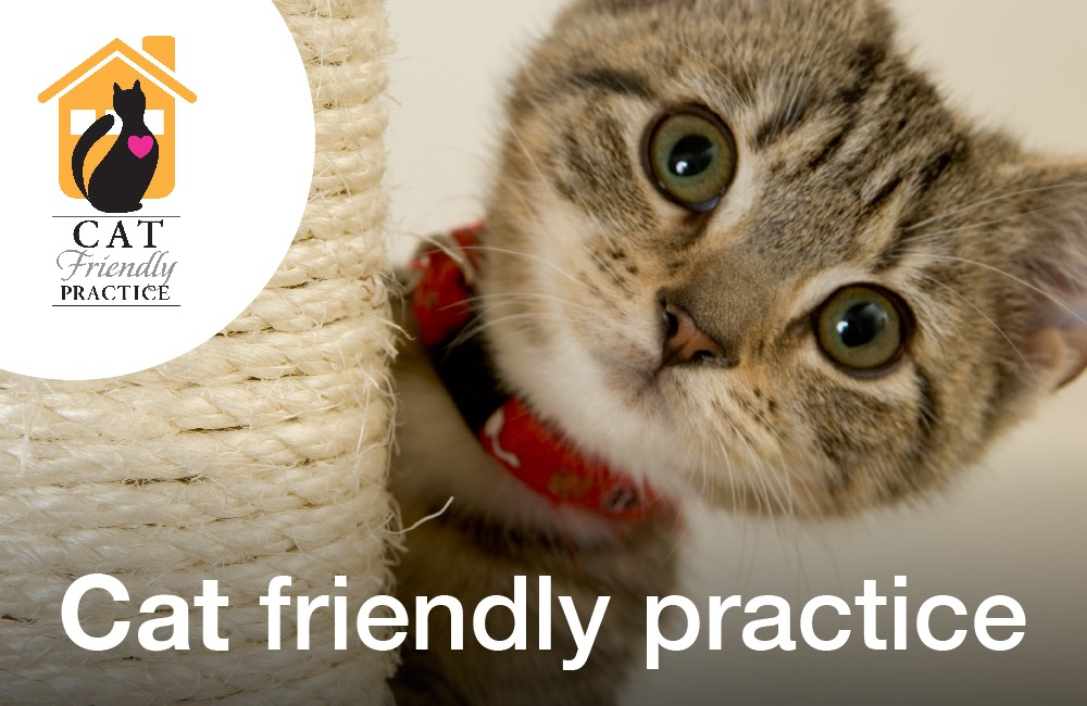 Cat Friendly Practice Service