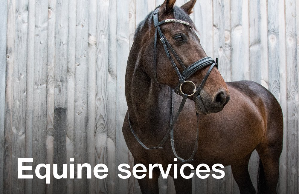 Tay Valley Vets - Equine Services