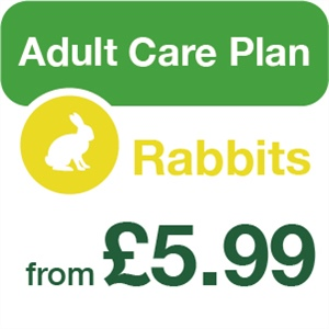 Adult Pet Care for rabbits