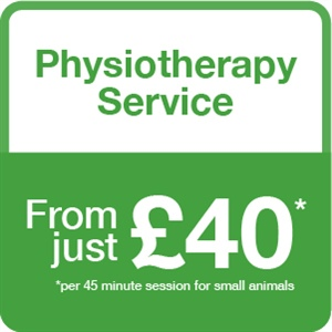 Physiotherapy services graphic panel with green and white text