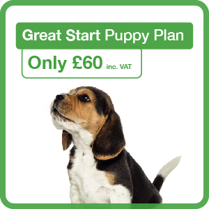 Great Start Puppy Plan graphic panel