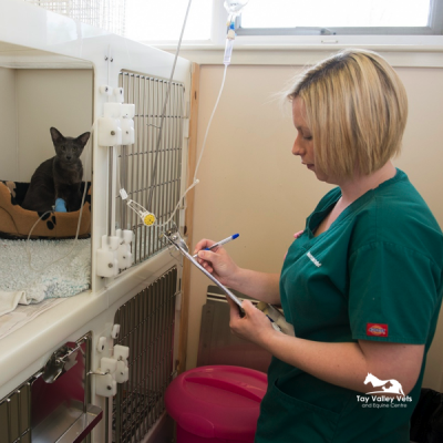 Gillian attends patients on our cat ward.