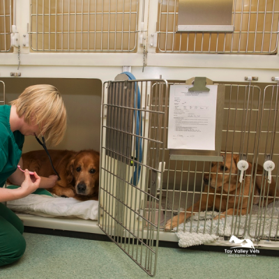Gillian attends patients on our dog ward.