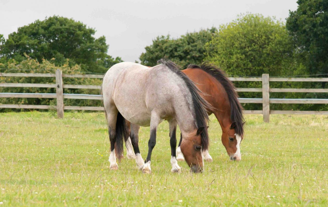 horse passports tay valley vets   veterinary practice in