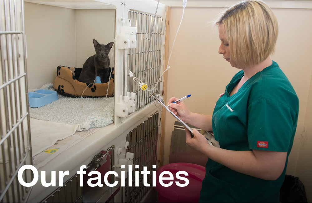 Tay Valley Vets Vacancies graphic panel. Vet Gillian checking on a cat on the cat ward