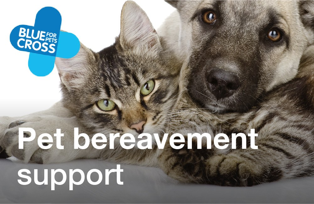 Tay Valley Vets Pet bereavement support graphic panel. Dog and cat laying side by side with the Blue Cross for Pets coloured logo top left