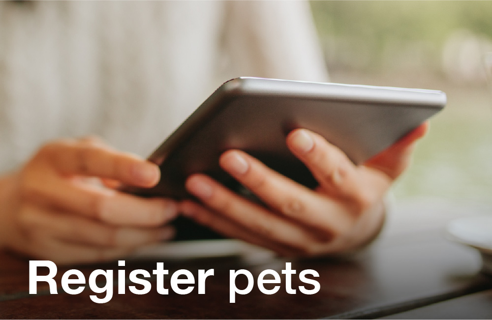 Tay Valley Vets Register Pets services image. Person looking at their tablet