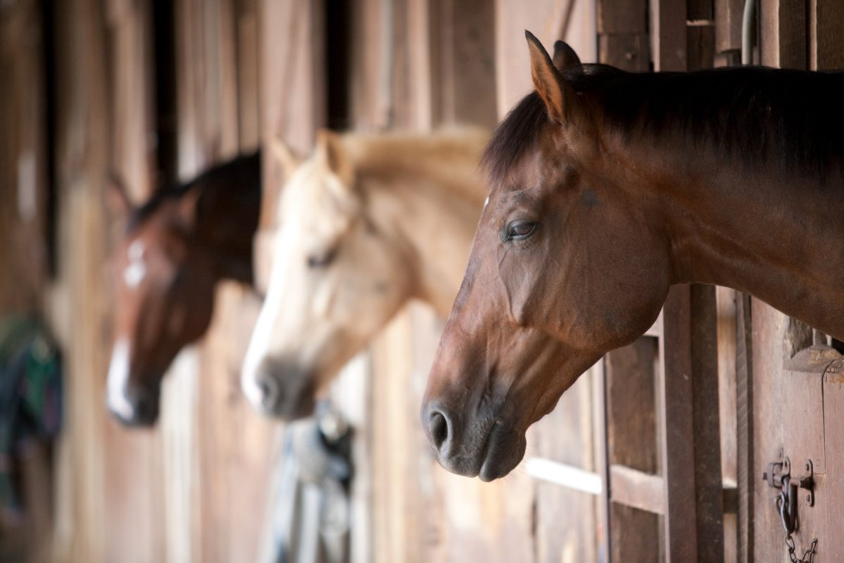 Equine - News Articles